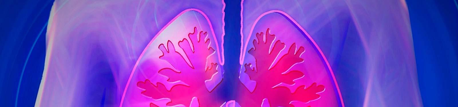 organos que intervienen en el sistema inmunologico