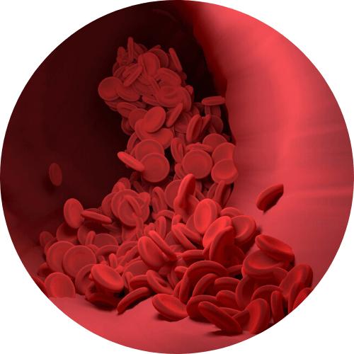 componentes de las celulas