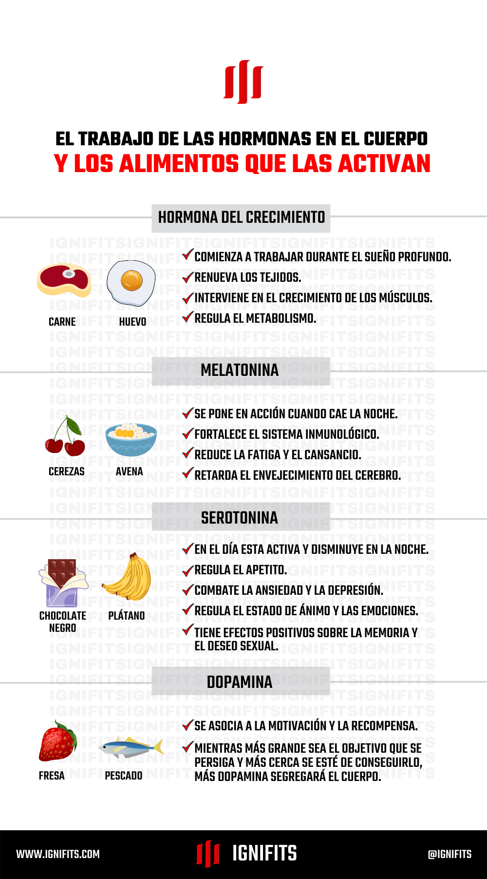 hormonas que intervienen en la hipertrofia